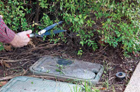 Trim brush from around your water meter